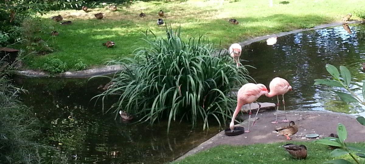 Bild großformatig von Flamingos im Zoo